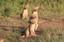 Löwenkindergarten