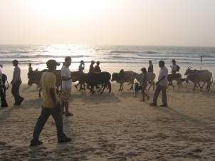Intian matka 15.2 - 6.3.2008 599