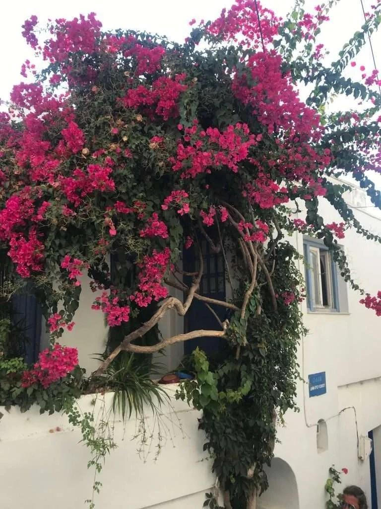 Naxos Griekenland streets flowers