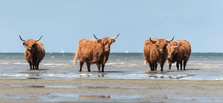 natuurgebieden Nederland