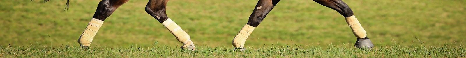 Bedarfsgerechte Pferdefütterung Ernährungsberatung Pferd Futterberatung Vorträge Reitunterricht Reitunterricht Franken Oberpfalz