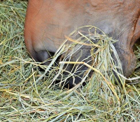 Heuanalyse für Pferde – sinnvoll oder unnütz?