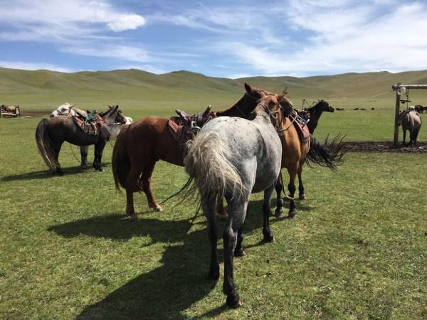 Mongolei Foto:Agnes