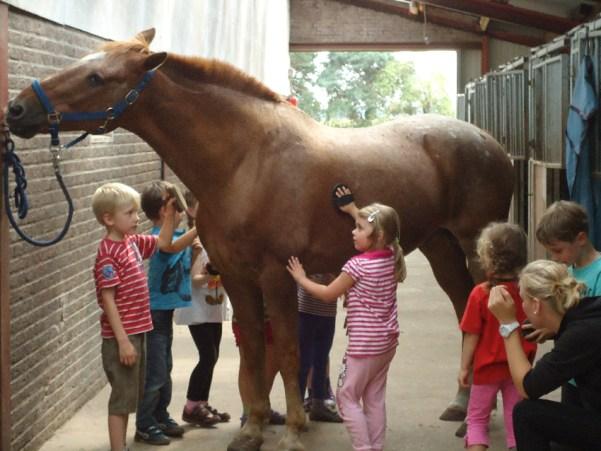 Kinder mit Toni im offenen Stall Voltage41 B