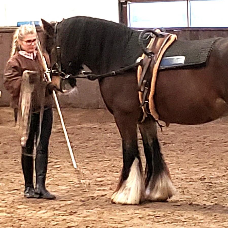Lea und Edwin in der praktischen Longierprüfung. Foto: Kirsten Teich