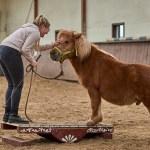 Zirkuskurs mit Heidi Hafen: Lea und Lümmel