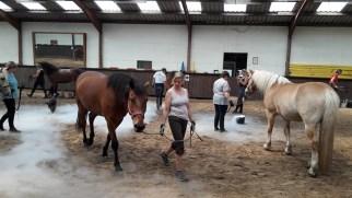 Showtraining: Gewöhnung der Pferde an Nebel