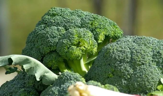 mencegah diabetes dengan brokoli