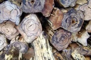 harga kayu gaharu