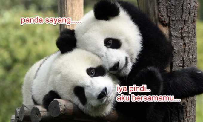 panggilan sayang panda pindi