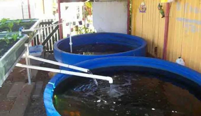tingkat ph pada air