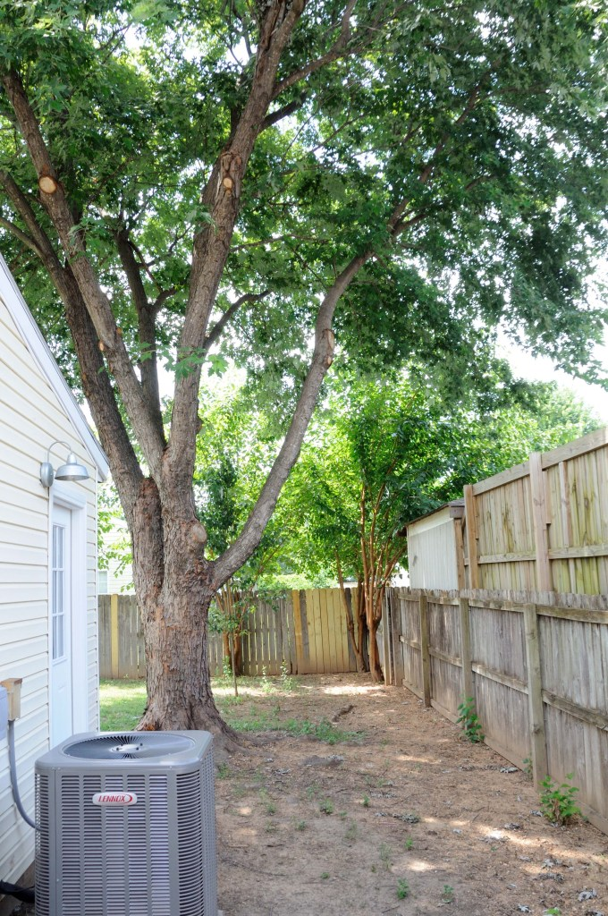 backyard 4 after