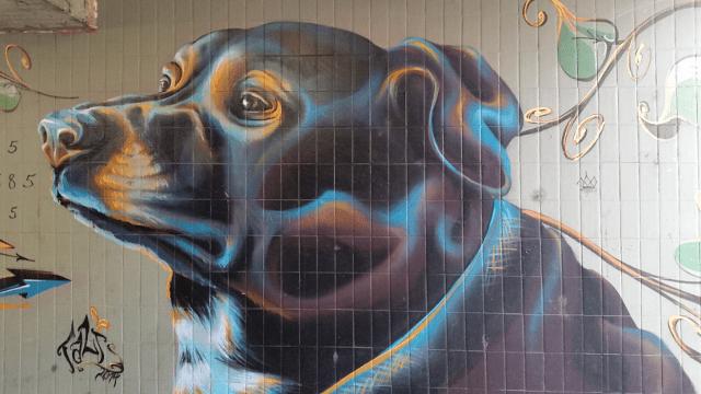 GraffityDog2