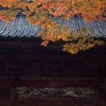 彦根城の紅葉2017!見頃時期やライトアップの日程は?