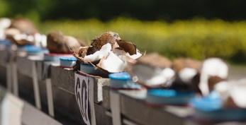 RID-Weltrekord-Kokosnuesse_Ellenbogen_4