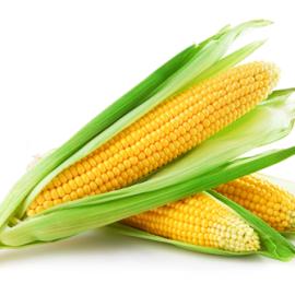 blé d'inde