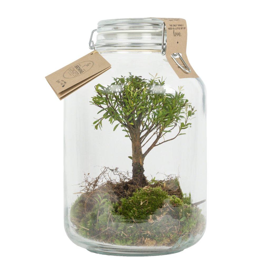 weckpot planten ecosysteem groen duurzaam relatiegeschenk idee