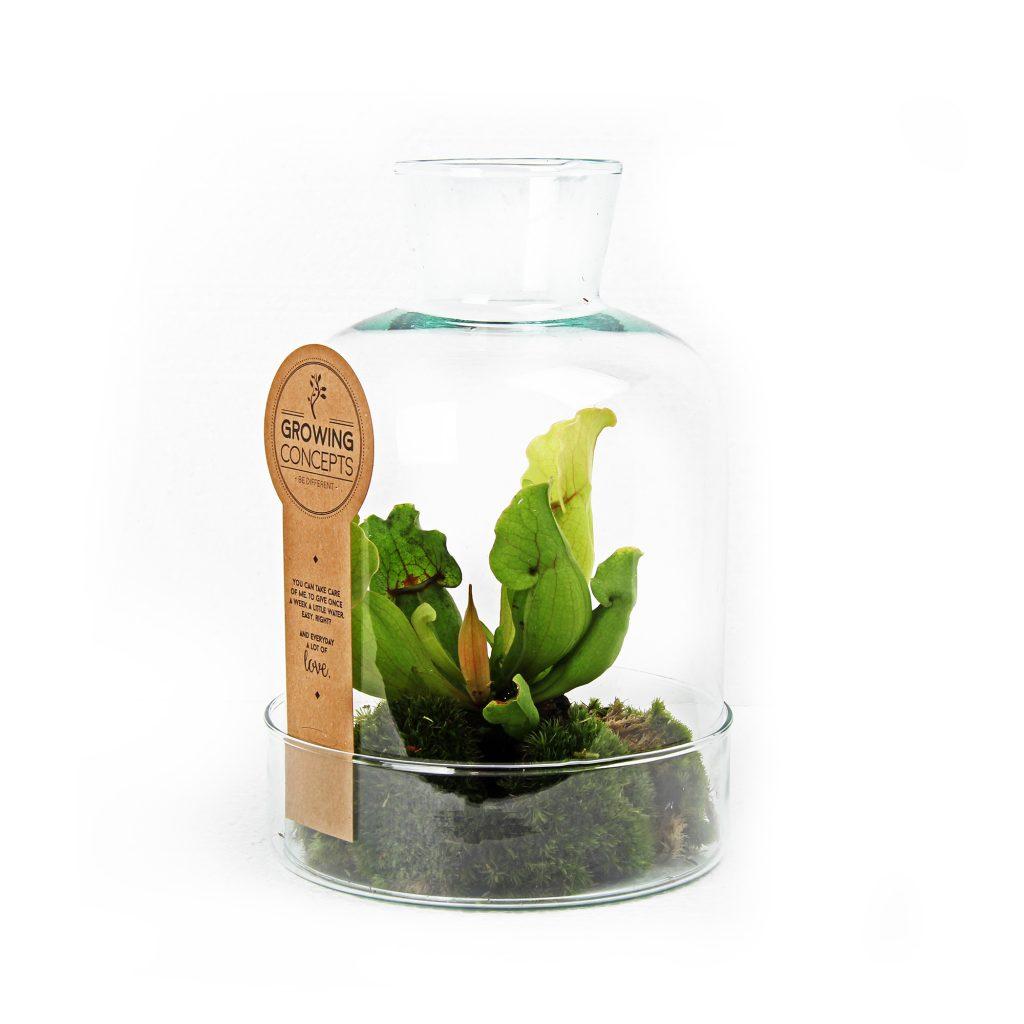 weckpot planten ecosystemen groen relatiegeschenk idee