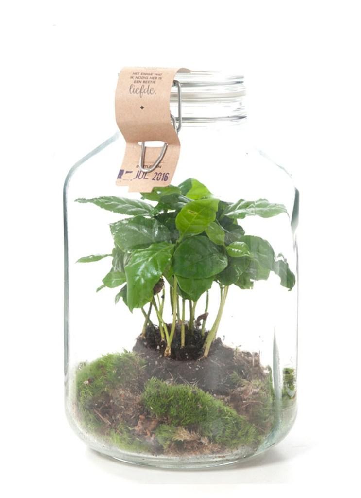 ecosysteem weckpot plantje hip groen relatiegeschenk idee