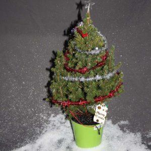kerstboom geschenk groene energie uit wortels
