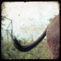 2012 09 amalfi donkey