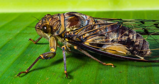 insecto photo