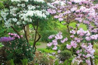 flores nuriacopia