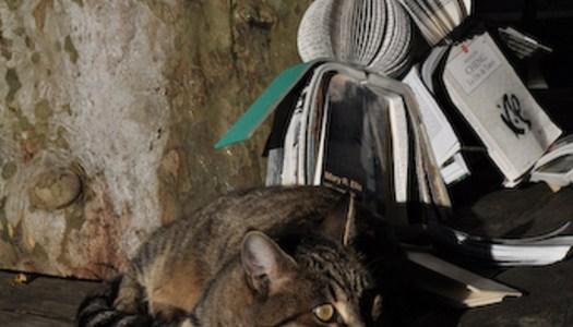 Jan Reymond: ¿qué hacer con esos libros sin dueño?