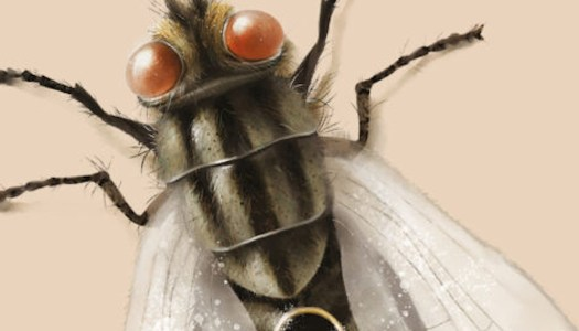 Nuestra piel muerta: los insectos abaten sus alas sobre nosotros