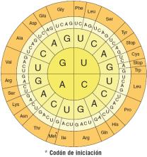 codigo genético