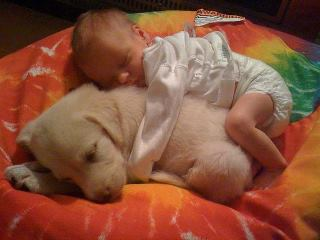 341 Relax and Succeed - Baby and Puppy