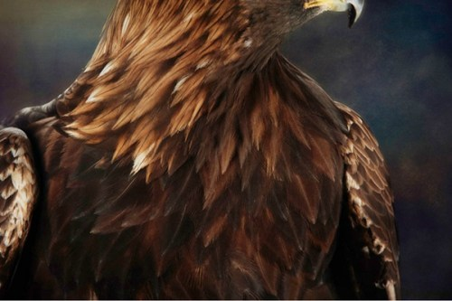 515 Relax and Succeed - Golden Eagle's Chest by Frank Grisdale