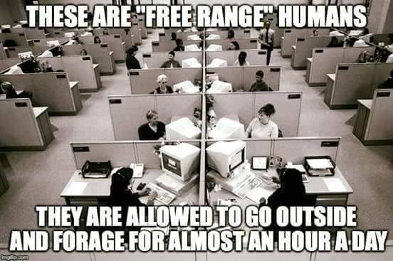 960 Relax and Succeed - These are free range