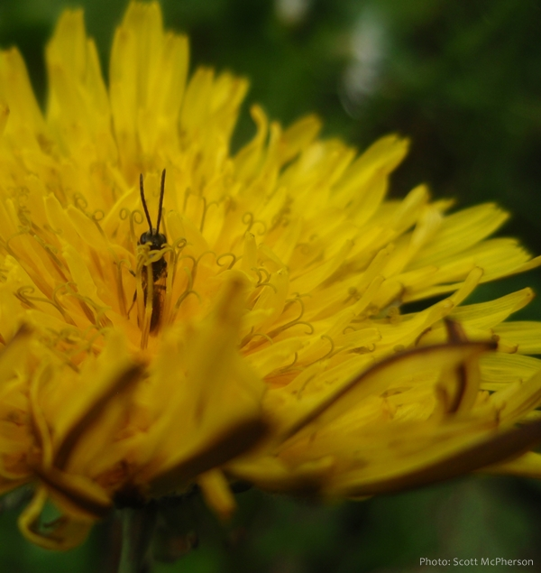232 Relax and Succeed - Dandelion