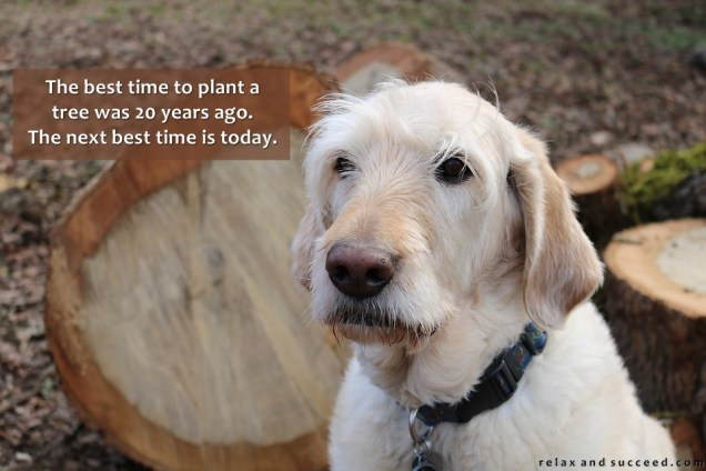 1274 Relax and Succeed - The best time to plant a tree