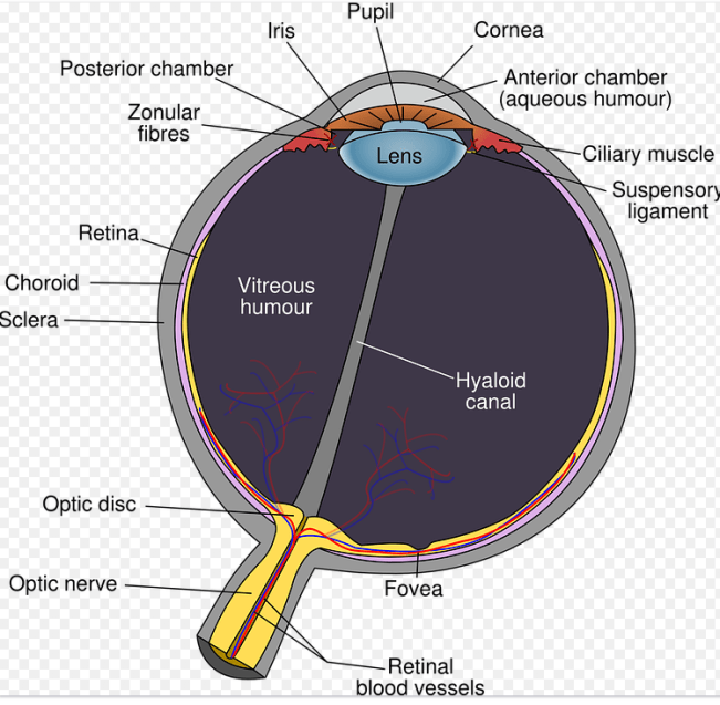1378 Relax and Succeed - Eyeball diagram