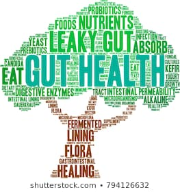 The Rainforest That Is Your Gut – Part 3 – Your liver and why it is your best friend