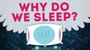 Sleep – The Habit You Need To Create ASAP For Longevity
