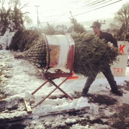 Christmas Tree netting