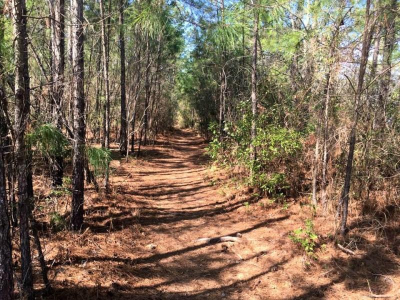 BNP Trail Jam Course