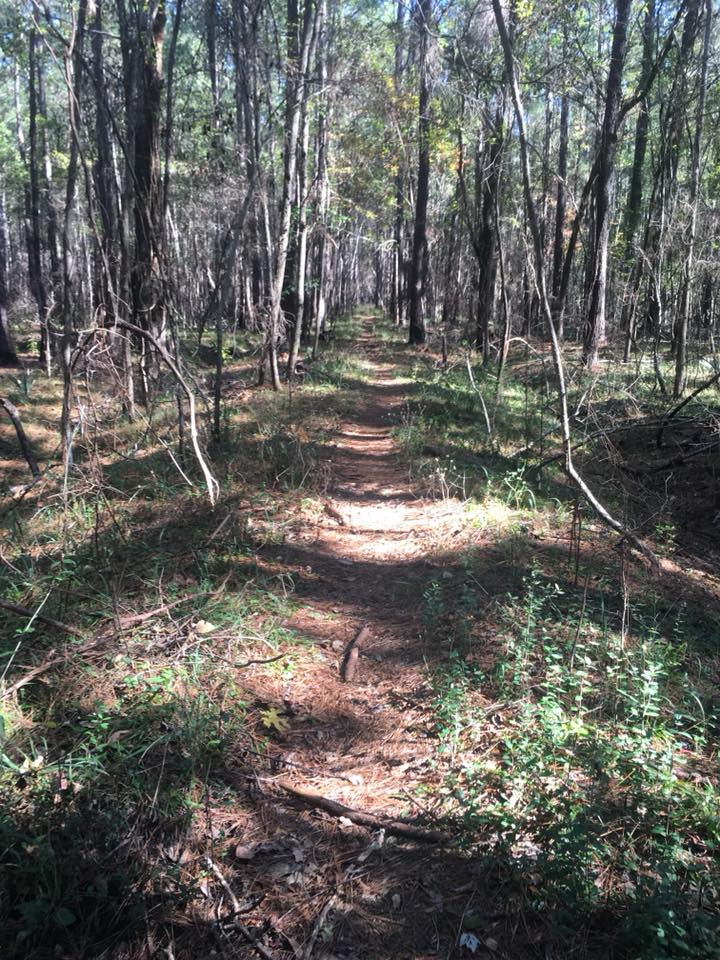 swamp fox 7 julie
