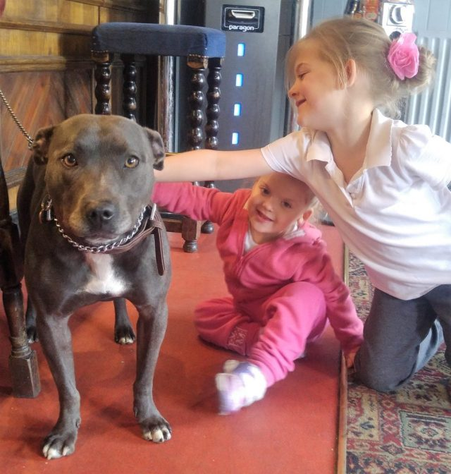 Saphy the Staffy