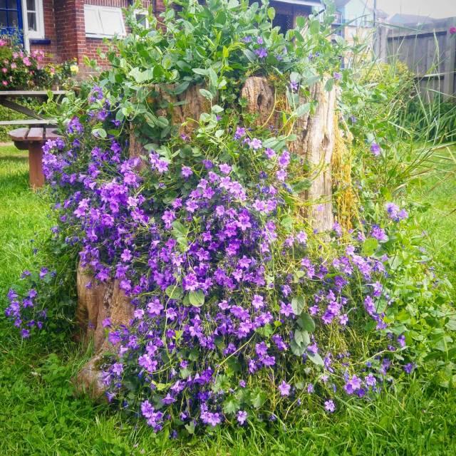Beer Garden Flowers