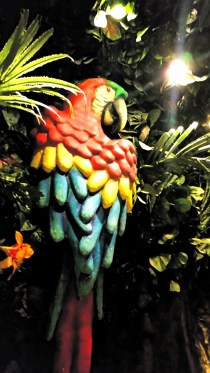 Parrot at Rainforest Café