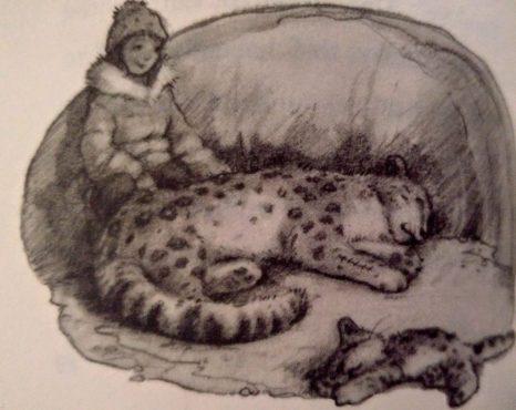 One Snowy Night Animal Anthologies