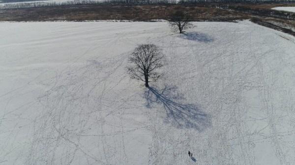 ハルニレの木 空撮 ドローン