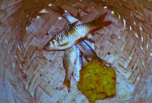 Filipinskefiskerogriktigagn-foto.erlinglorentzen