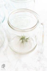 Zero Waste - Besser Leben ohne Plastik in der Küche - plastikfreie Alternativen für die Küche - Gläser als Alternative zu Frischhaltefolie | relleomein.de