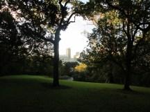 Auckland Domain mit Blick nach Downtown