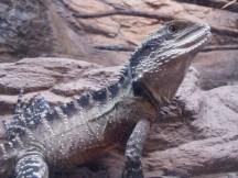 National Aquarium - Als er die Kamera sah nahm er diese Pose ein.
